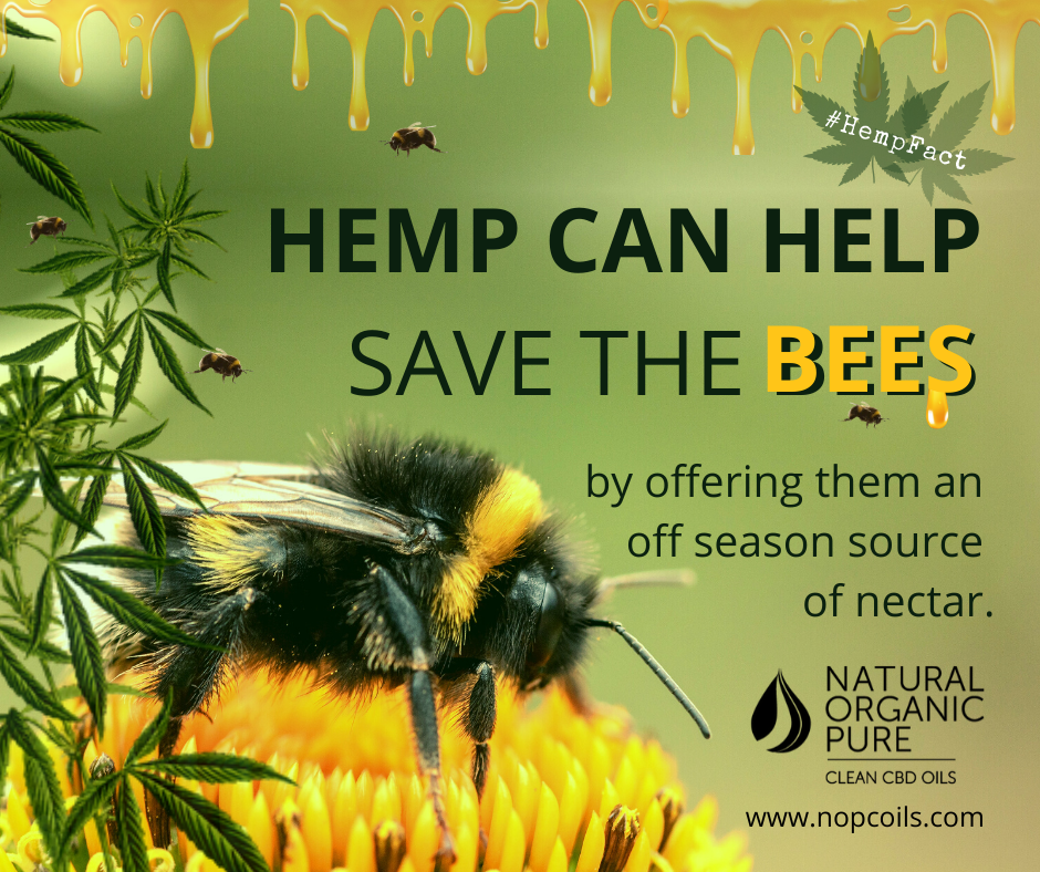 hemp could help save the bees ending the threat of their extinction-nopcoils-hemp facts blog