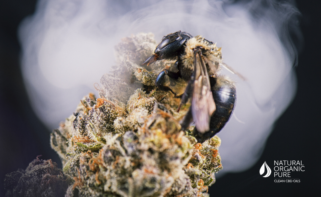 Close up detail of insect over cannabis bud-nopcoils