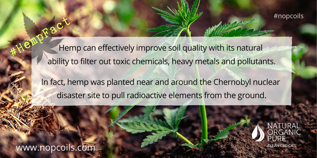 hemp improves tthe soil in which it grows-hemp facts blog-nopcoils