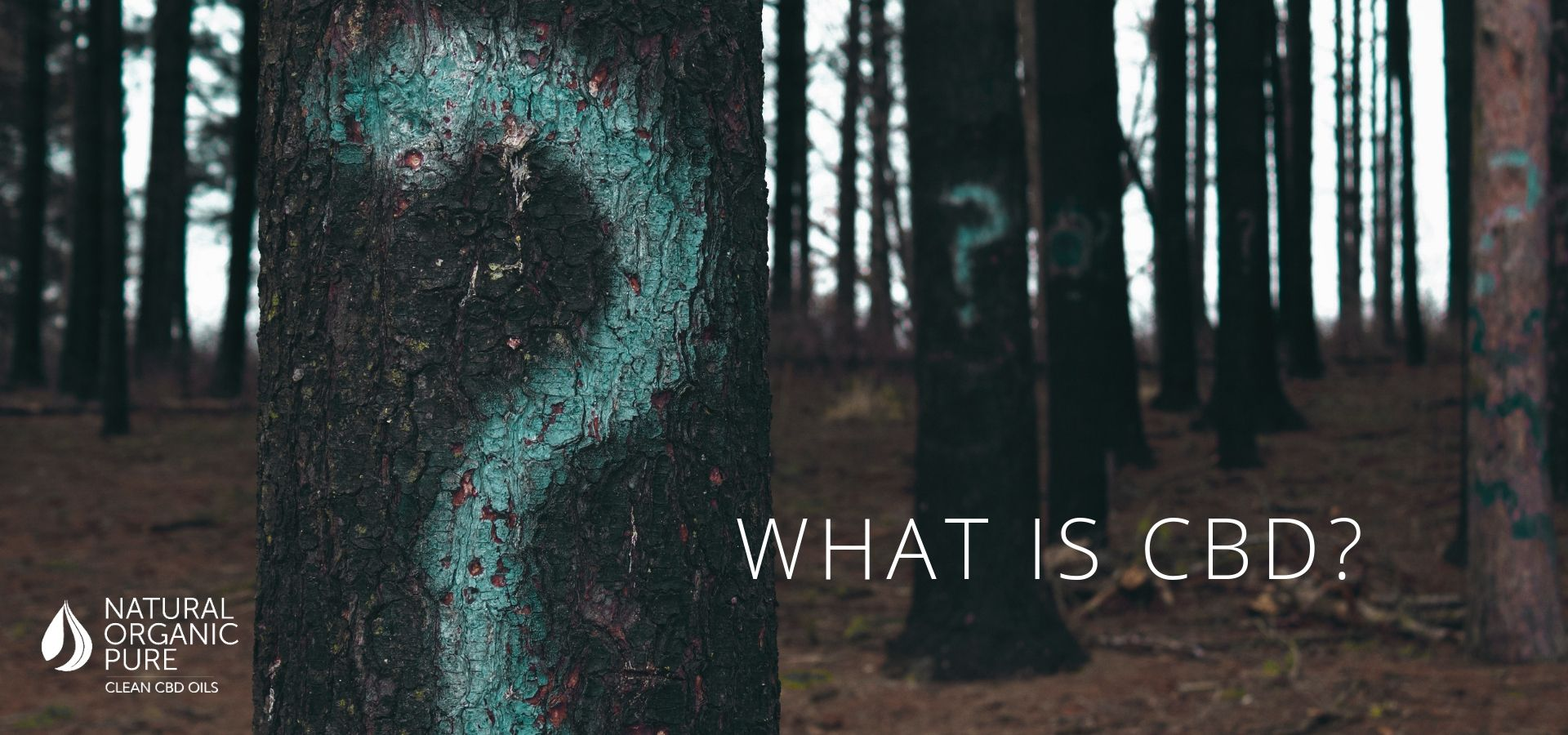 Tree trunk with question mark sprayed on and title_What is CBD? by natural organic pure clean cbd oils