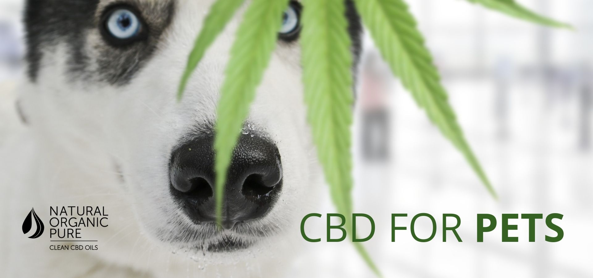 CBD oil for pets-can cbd be used on pets-nopc oils