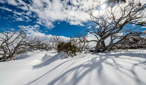 Perisher Snowgum Jacket