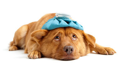 Post-Surgery Pet Recovery Tips