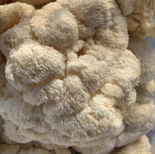 Load image into Gallery viewer, Lion's Mane Mushrooms