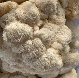 Lion's Mane Mushrooms | Fresh Organic Mushrooms | Roseville, MN | R&R Cultivation