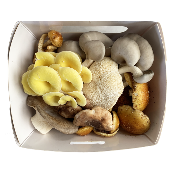 1# Discount Ugly Mushroom Box! | Fresh Organic Mushrooms | Roseville, MN | R&R Cultivation