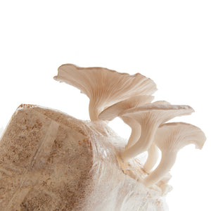 At-Home Mushroom Grow Kits - R&R Cultivation