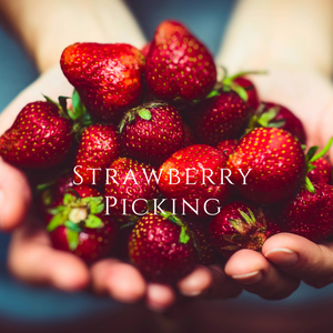 Strawberry Picking - Soy Wax Melt