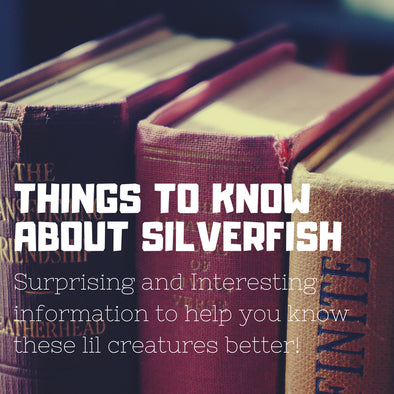 Things to know about Silverfish