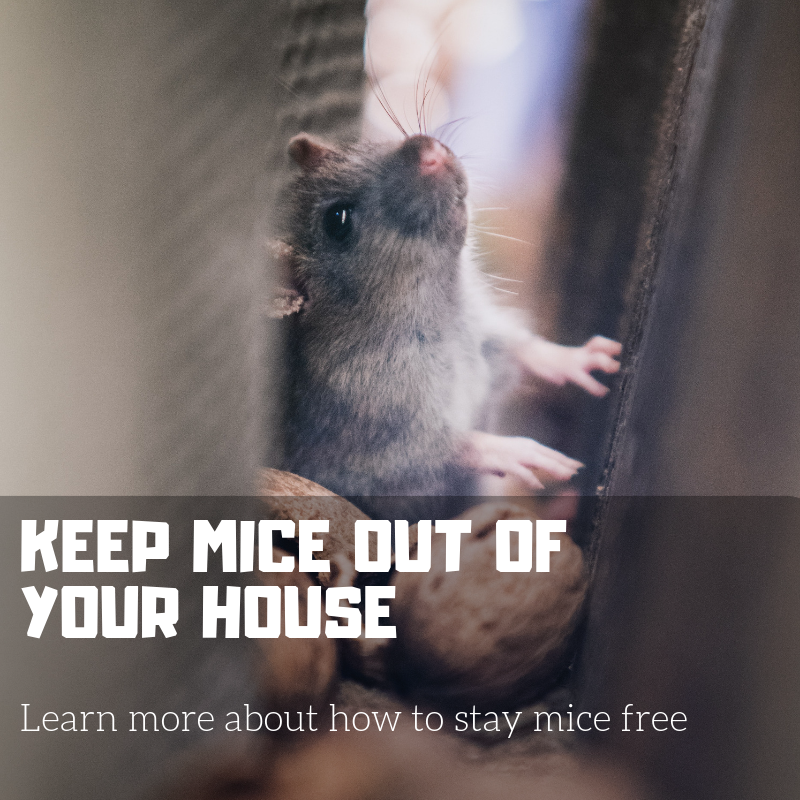 KEEP MICE OUT OF YOUR HOUSE