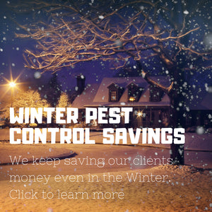 Winter Pest Control Savings