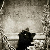 Black Cat (Cashmere, Soft Black Leather, Brushed Suede, Black Amber, Myrrh, Ancient woods, Moss, White Birch, Clove)