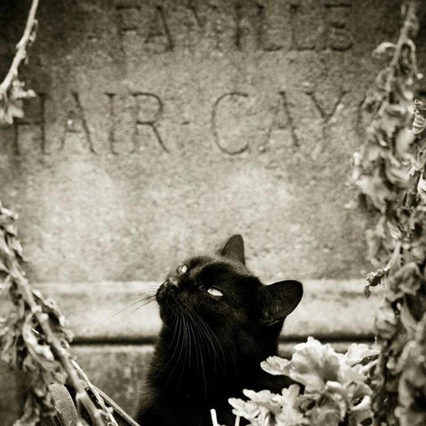 Black Cat (Cashmere, Soft Black Leather, Brushed Suede, Black Amber, Myrrh, Ancient woods, Moss, White Birch, Clove, Pink Peppercorn, Frankincense, Texas Cedar Wood, Black vanilla)