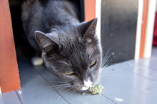 Load image into Gallery viewer, Whole Catnip Buds - Meowy Janes