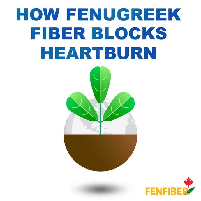 How Fenugreek Fiber Blocks Heartburn