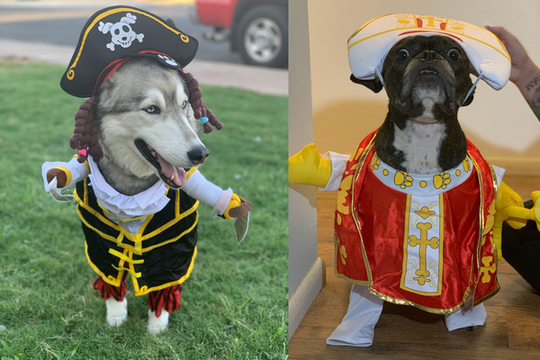 HALLOWEEN COSTUMES FOR PETS | PIRATE & POPE COSTUME'S