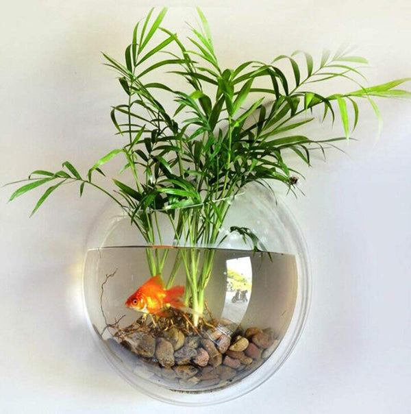 Wall Mounted Acrylic Fish Bowl Aquarium Planter - NovaandKnox.com