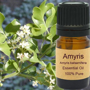Amyris Essential Oil - Wild Harvested Steam Distilled