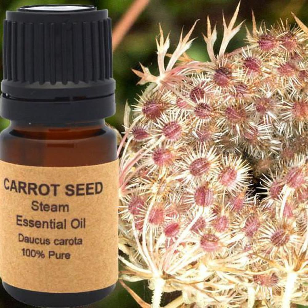 Carrot Seed Essential Oil - Conventional (Non GMO) Steam Distilled