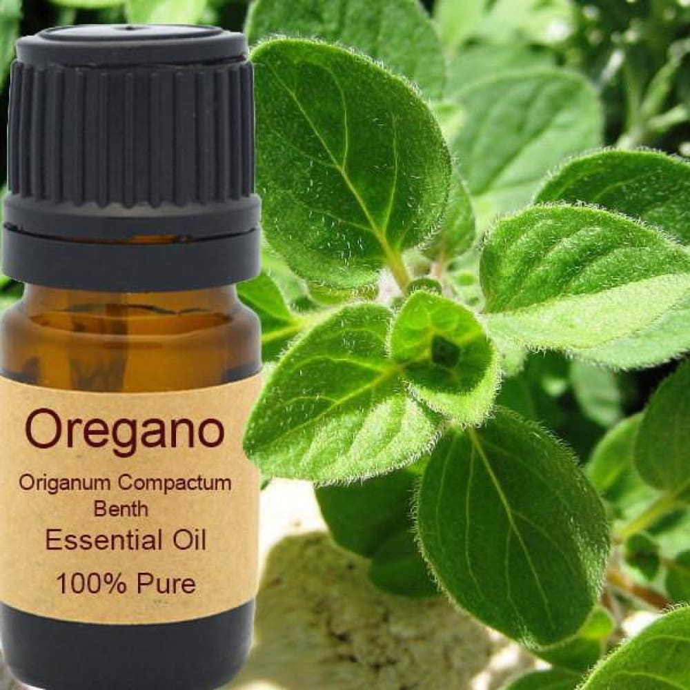 Oregano Essential Oil - Organic Steam Distilled