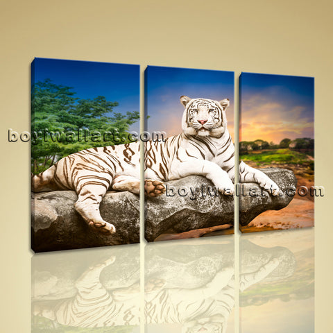 Large White Tiger Wall Art Canvas Photography Bedroom Triptych Pieces Prints