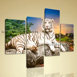 Large White Tiger Wall Art Print Photography Bedroom 4 Pieces