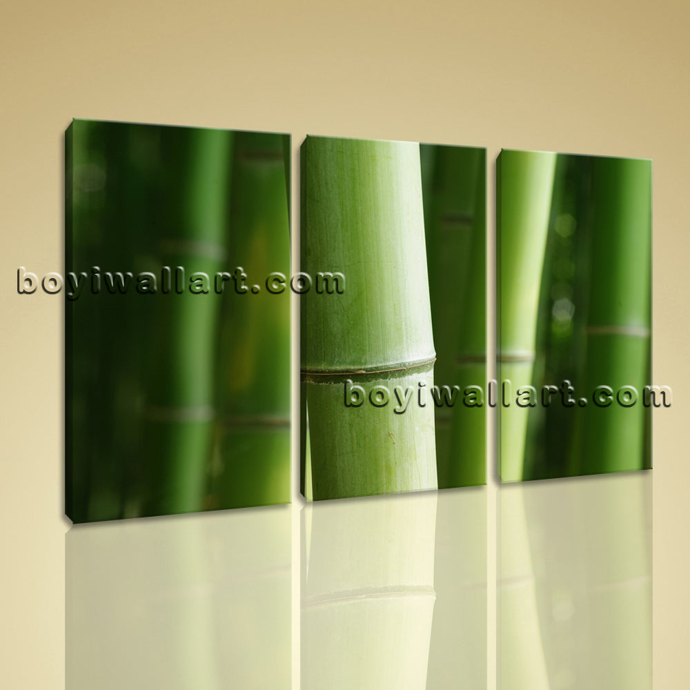 3 Pcs Modern Abstract Wall Art Botanical Feng Shui Zen Hd Print On Canvas Bamboo
