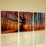 Large Autumn Forest Sunrise Landscape On Canvas HD Giclee Print Wall Art