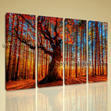 Large Forest Trees Landscape Photography Wall Art HD Giclee Print Living Room