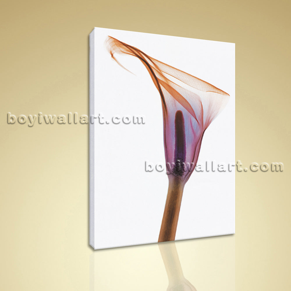 Contemporary Abstract Floral Painting HD Print Cala Lily Flower Canvas Wall Art
