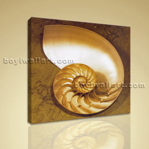 Modern Abstract Wall Art Picture HD Print On Stretched Canvas Sea Shell