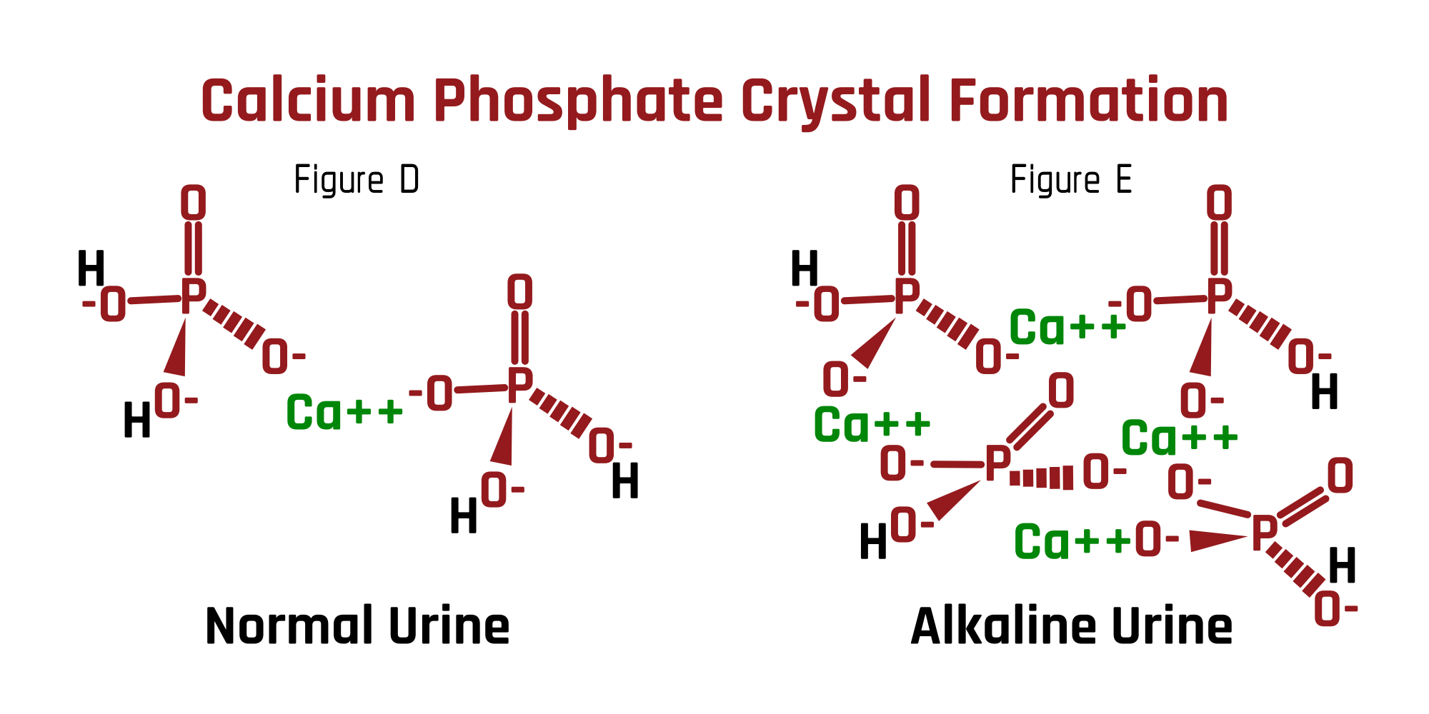 Calcium Phosphate Crystal Formation