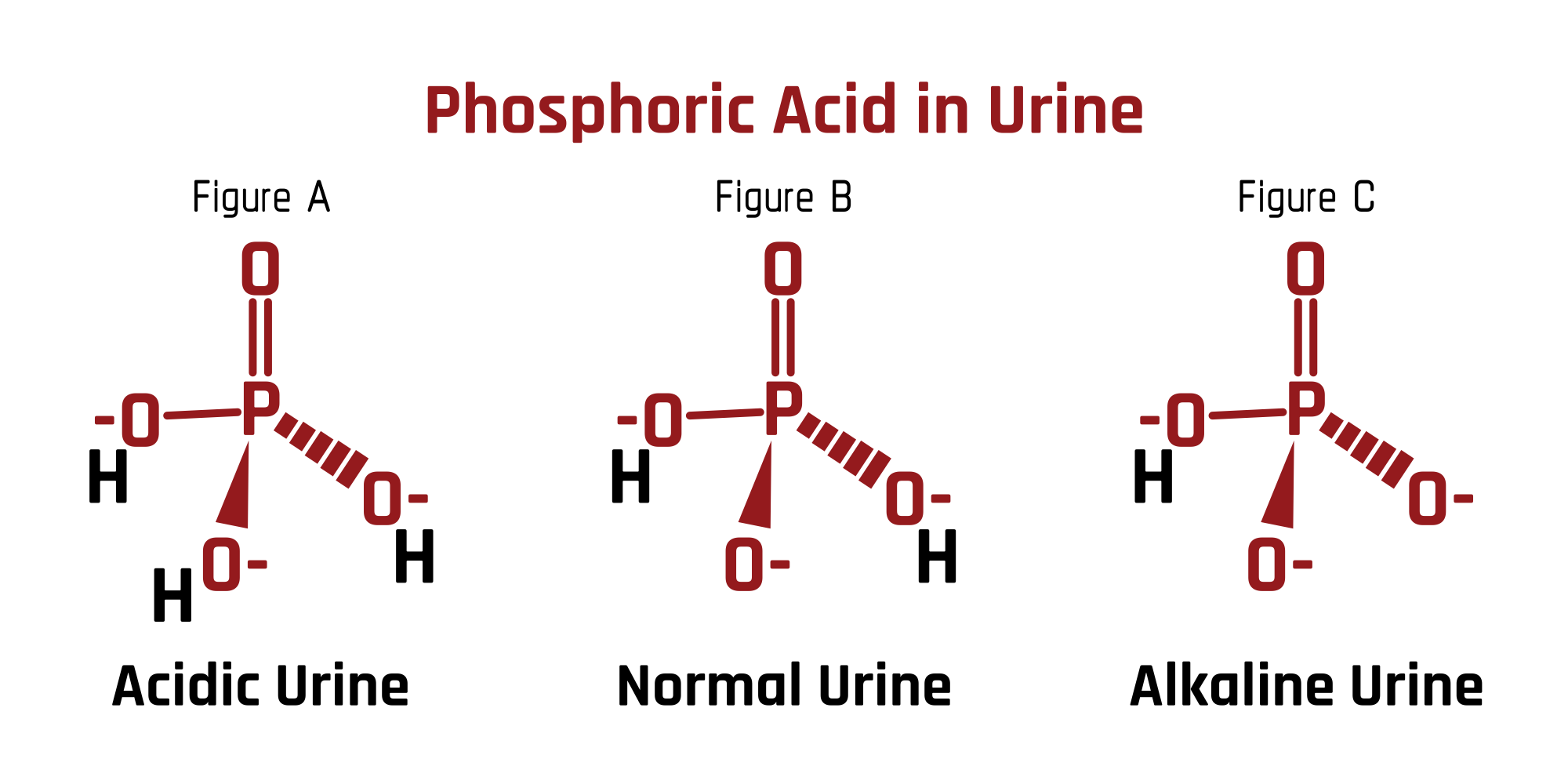 Phosphoric Acid in Urine