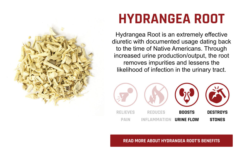 Hydrangea Root Ingredient Overview