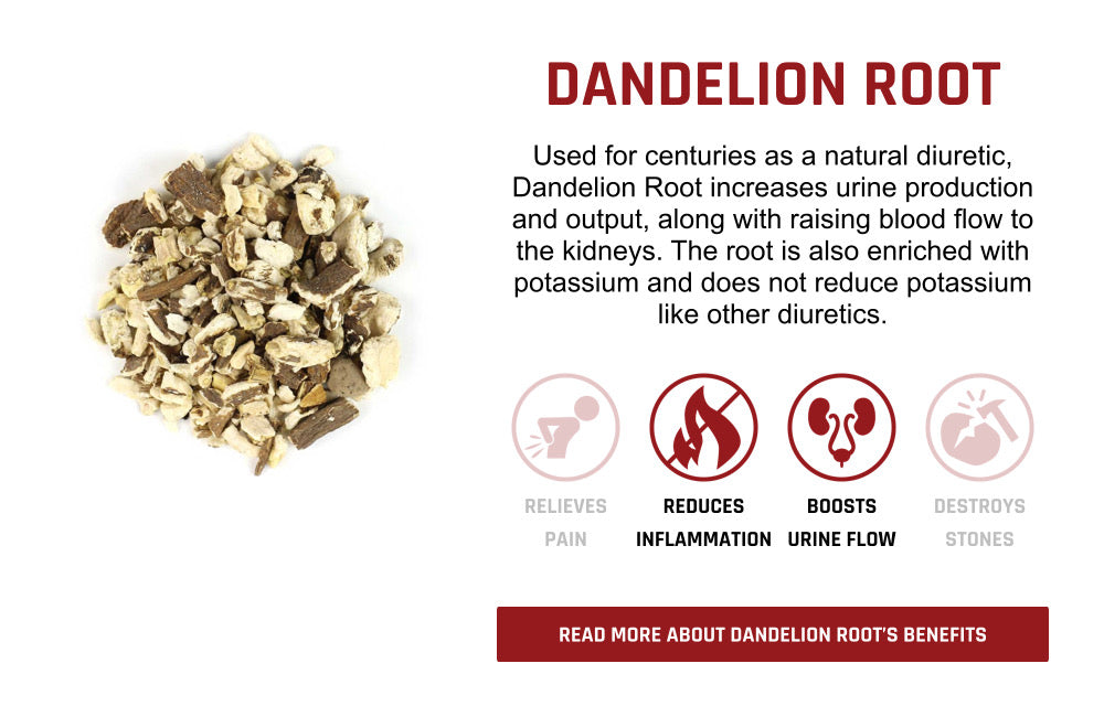 Dandelion Root Ingredient Overview
