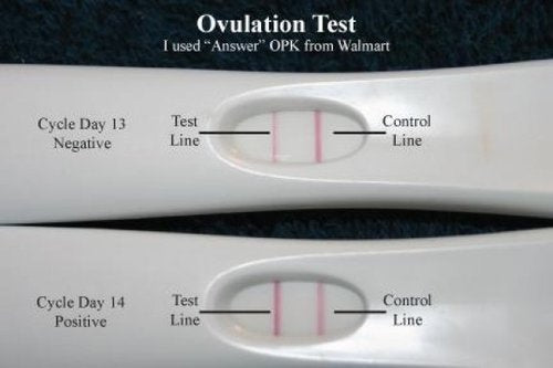 Positive and negative ovulation tests