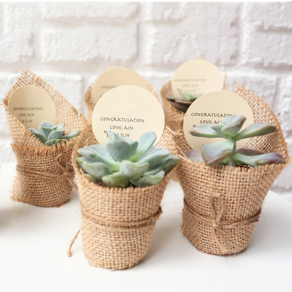 'Everything Succs' Bundle Gift