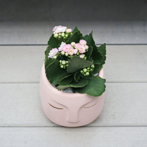 Kalanchoe Blossfeldiana Plant in in NEW Pink Face Planter