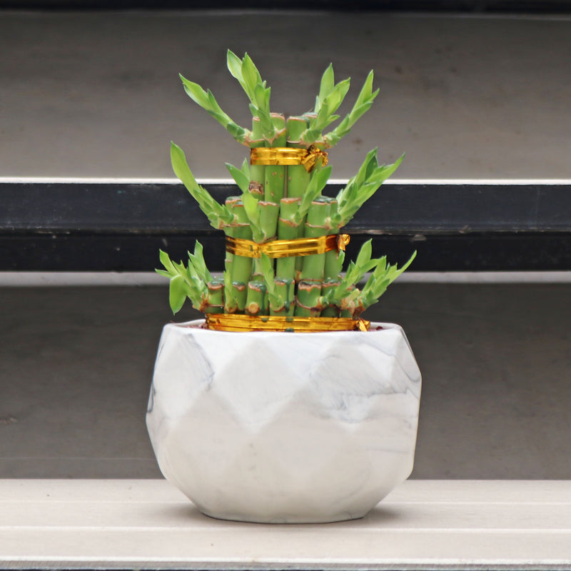 Bamboo Tower (S) in Geometric Marble Planter