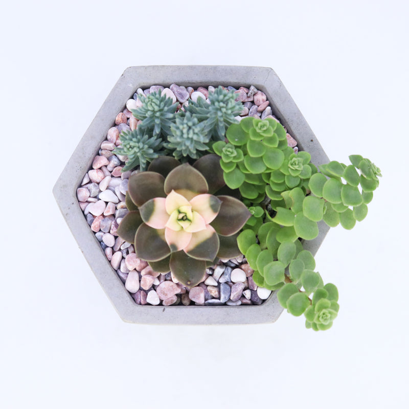 Pulpy Hexy Planter (Medium Size)