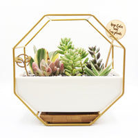 Pulpy Wall-Geo Planter Gold