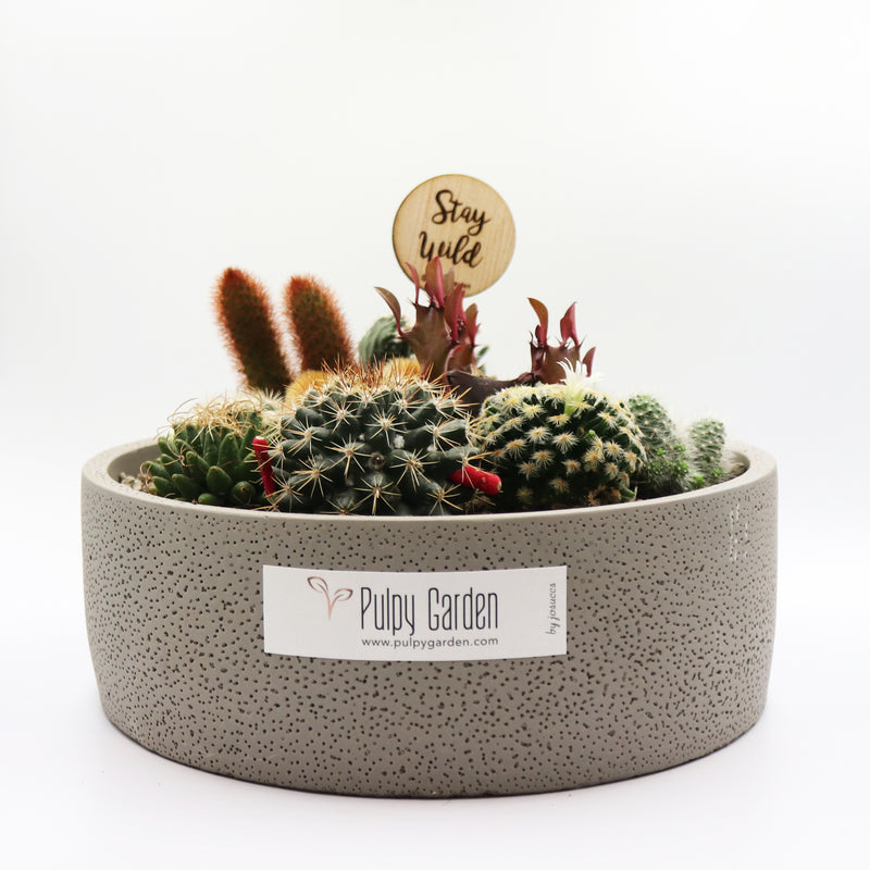Pulpy Love Planter - everything prickly