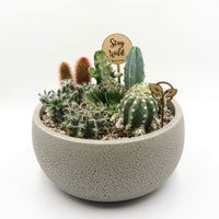 Pulpy Life Planter - Desert Theme