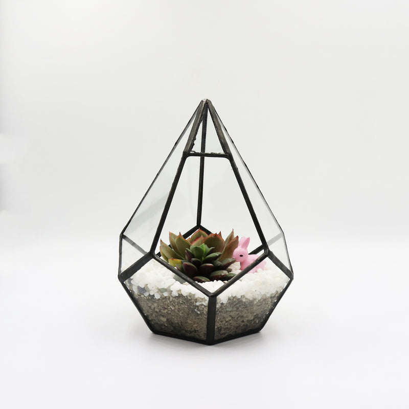 Mini Geometric Glass Terrarium