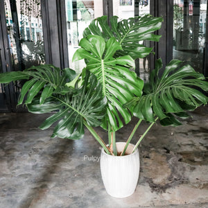 Monstera deliciosa XXL in CONCRETE Stripes Planter (160 - 180cm)