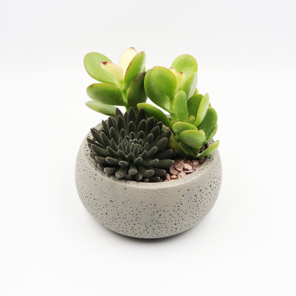 Pulpy Mini Concrete Planter aka Pulpy Palm Size Planter