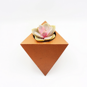 Oc-tahedron with Succulent