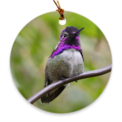 Costa's Hummingbird Porcelain Ornament