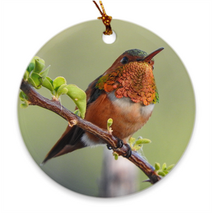 Allen's Hummingbird Porcelain Ornament