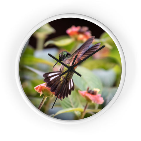 Stripe-tailed Hummingbird Wall clock